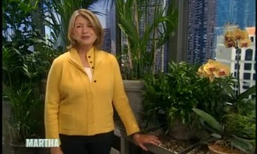 Learn to Landscape Your Home with Boxwood Shrubs