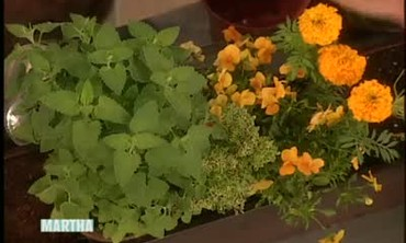 Plant Edible Flowers in a Home Garden or Planter