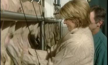 How to Milk Sheep at Old Chatham Sheepherding Co.