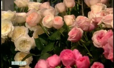 Planting and Upkeep of Roses with Michael Marriot