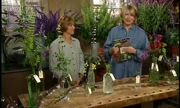 All About Salvia Plant Varieties with Kathy Pufahl