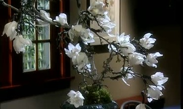 Fresh Orchid Centerpiece for Botanical Garden Gala