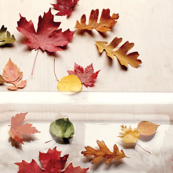 preserving leaves craft idea