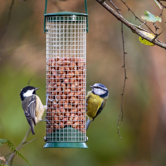 two birds at a feeder