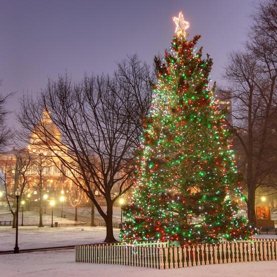 boston christmas tree