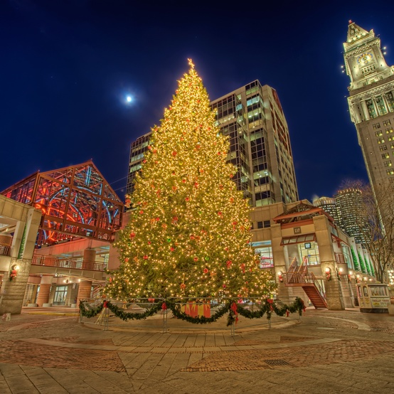 Boston Christmas tree