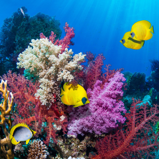 Fish Swimming Around a Wild Coral Reef