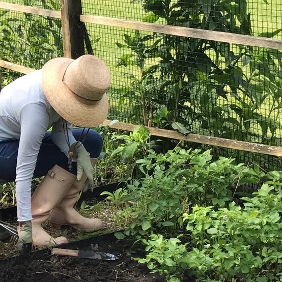 melissa ozawa gardening