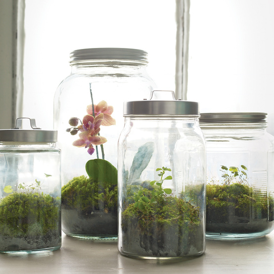 jars of terrariums