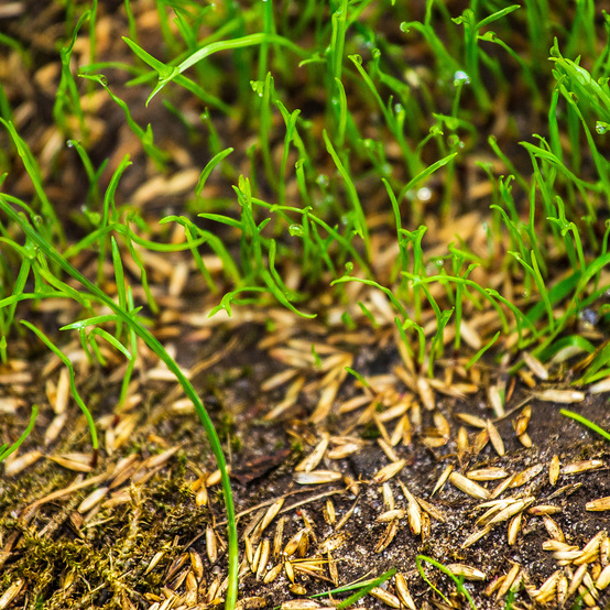 green grass growing from seeds in dirt