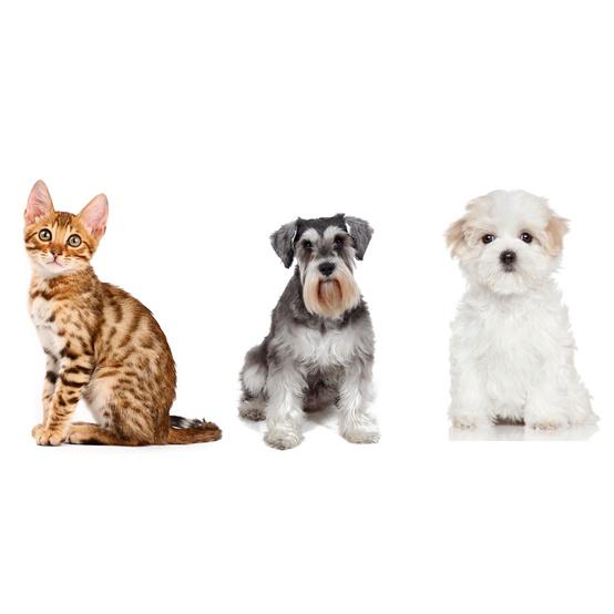 hypoallergenic pets
