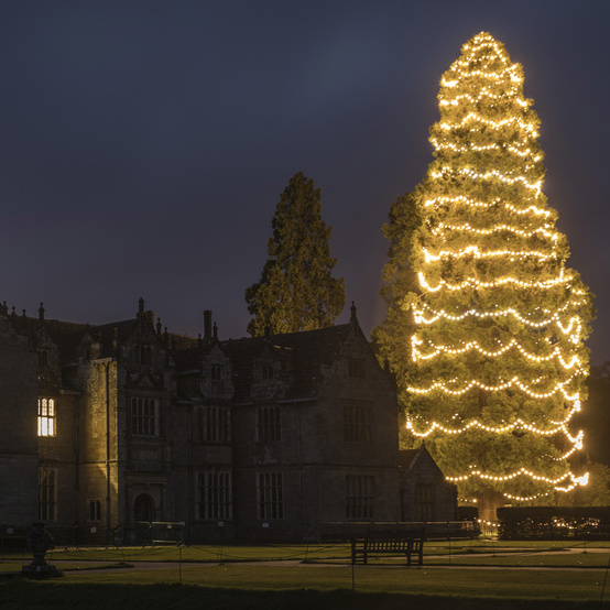 Wakehurst Christmas tree