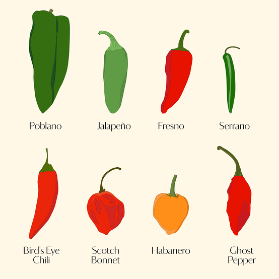Eight Varieties of Chile Peppers