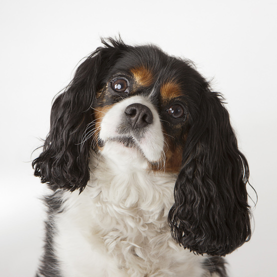 Can your dog understand you when you speak? A new study gives the answer.