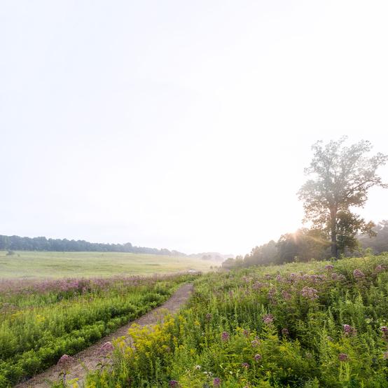 Longwood Gardens meadow garden