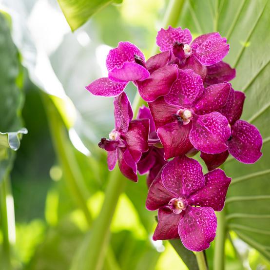 new york botanical garden awkwafina orchid