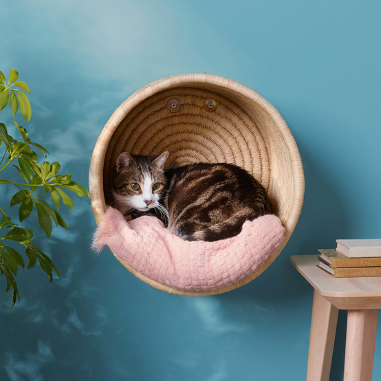 hanging cat basket with white and gray cat inside
