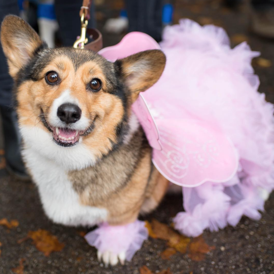 Tinkerbell dog costume at the Tompkins Square Halloween Dog Parade 2016