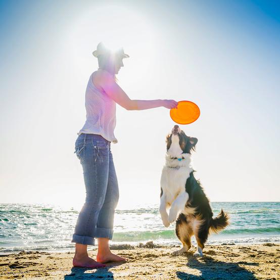 woman dog frisbee beach sand sea