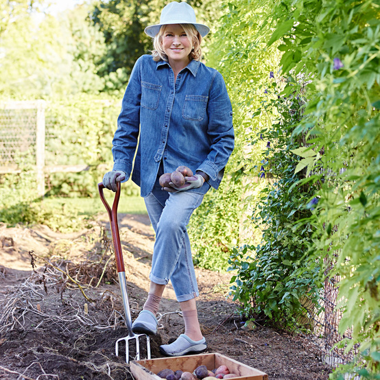 martha stewart potato garden