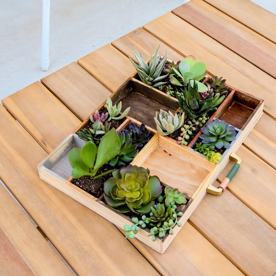 succulent planter in a letterpress tray