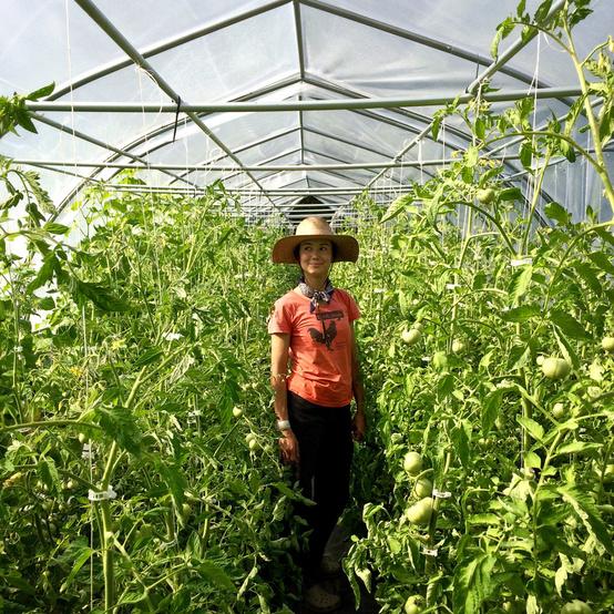 vera green tomatoes ten mothers farm