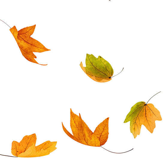 一组秋天的彩叶