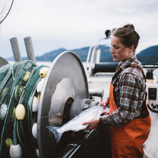 hand harvesting wild salmon drifters fish