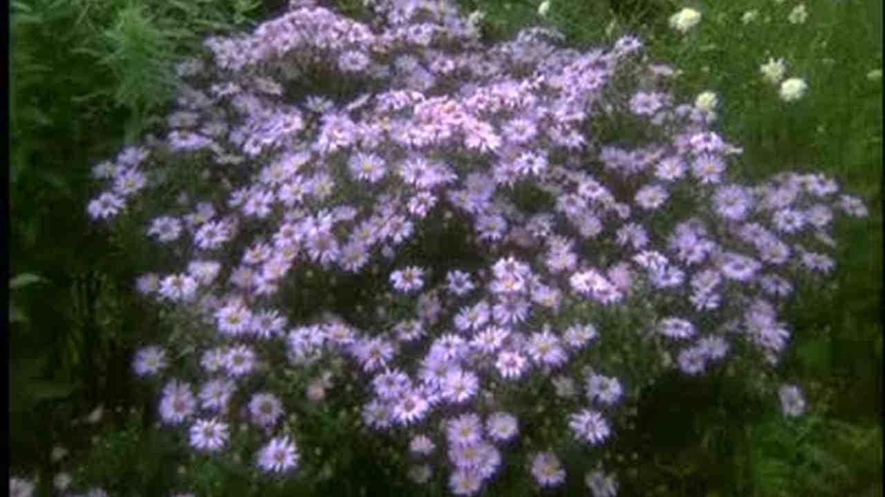 Video Martha Visits A Gorgeous Hosta Garden Martha Stewart