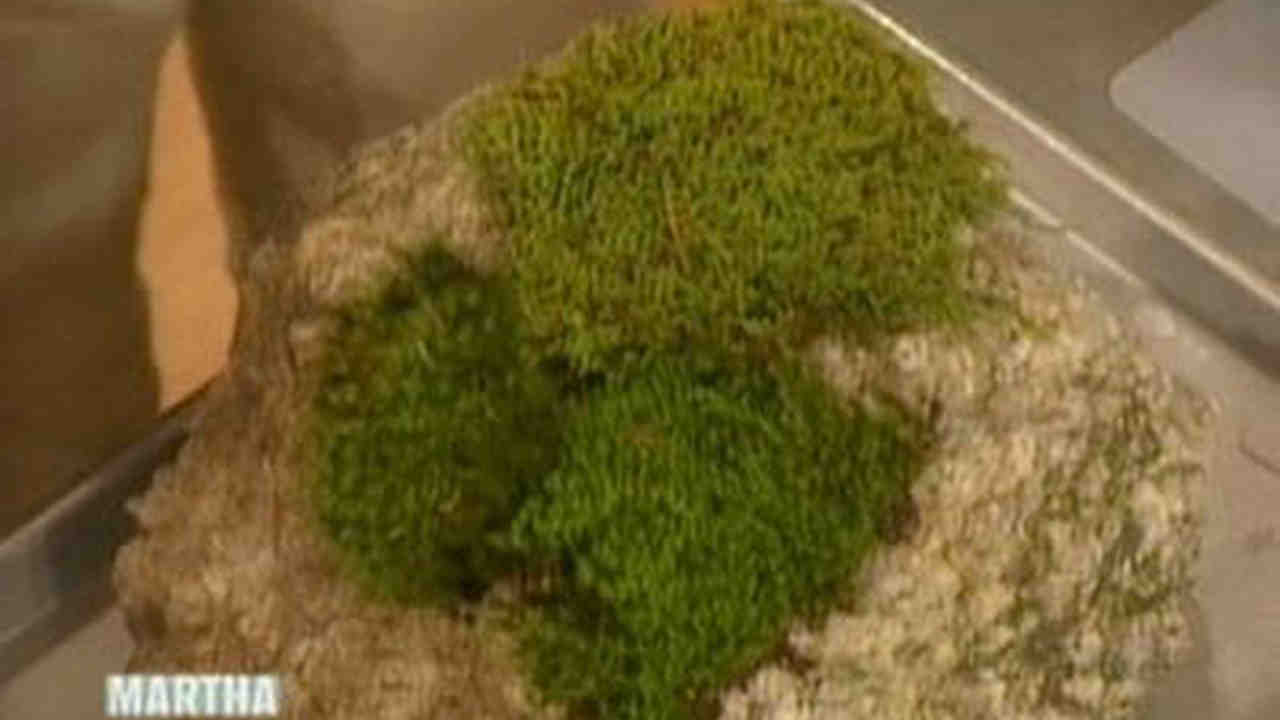 How to get moss to grow - How To Get Moss To Grow 46