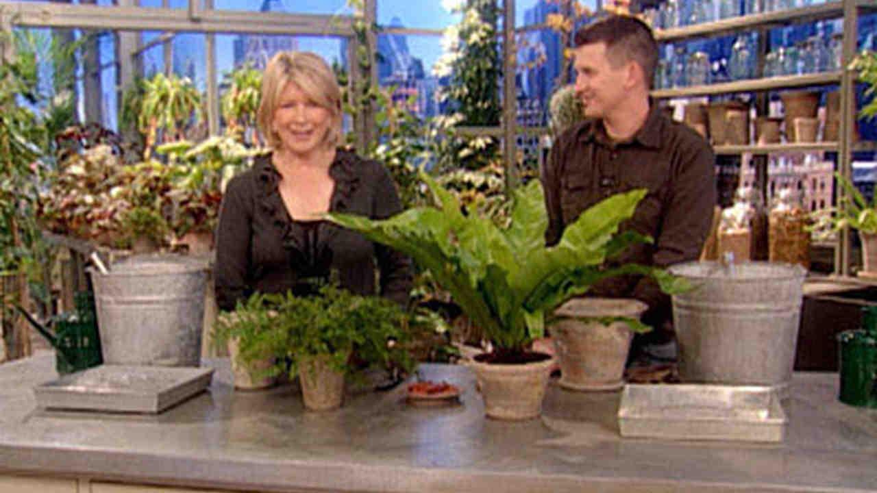 Video: Garden Tips and Tools | Martha Stewart
