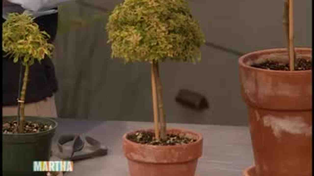 Video How To Make A Topiary Martha Stewart