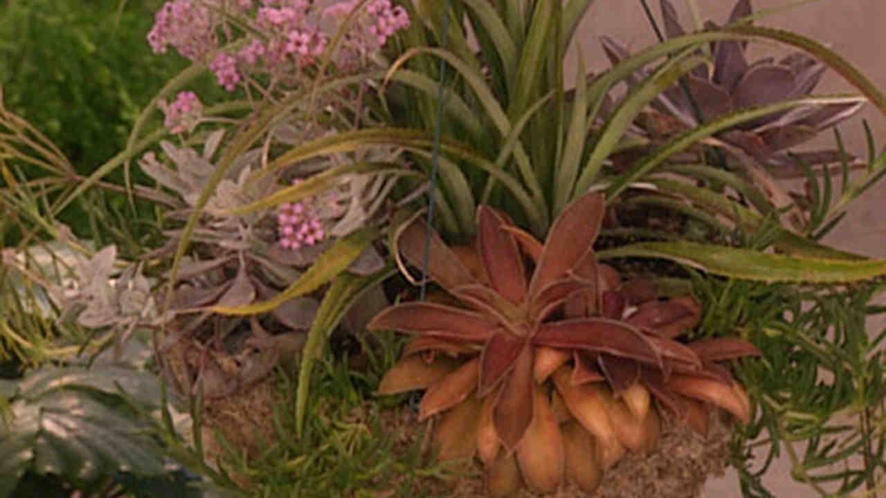 Video: Planting Succulents with Dennis Schrader of Landcraft ...