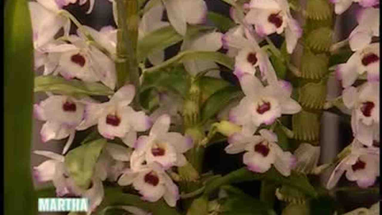 How to propagate orchids at home 99