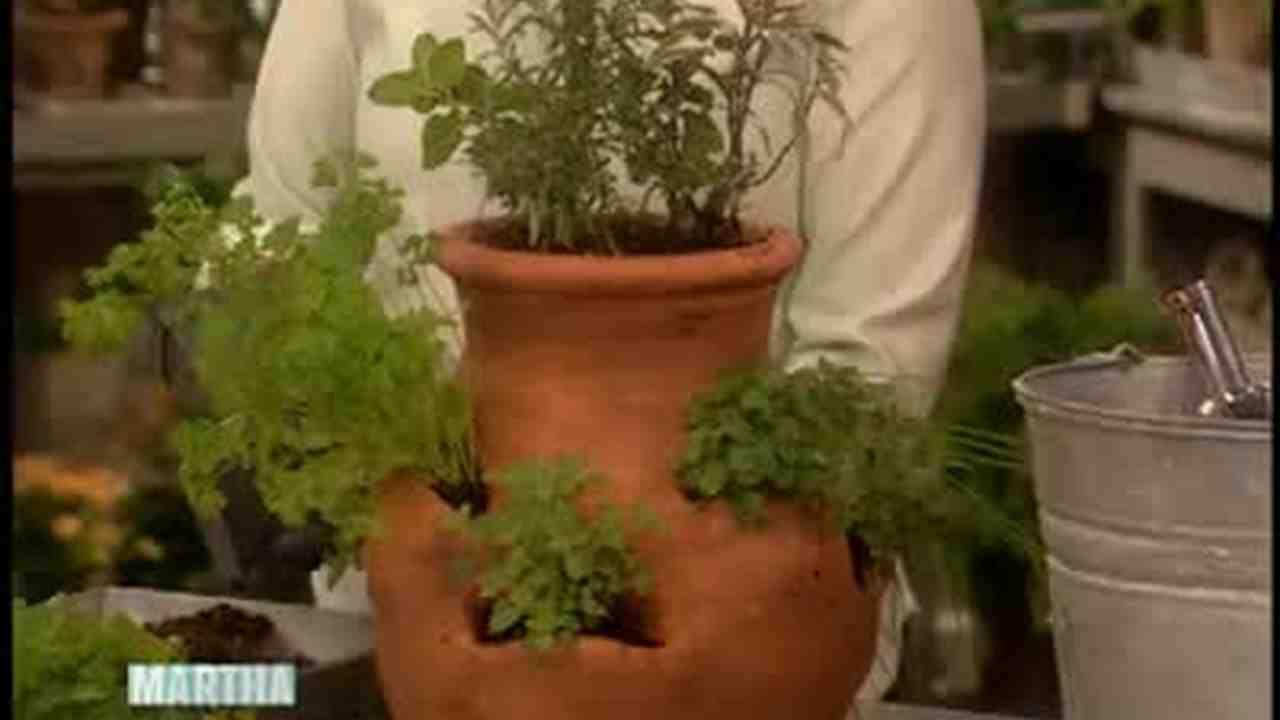 Video: How to Grow Herbs Indoors | Martha Stewart
