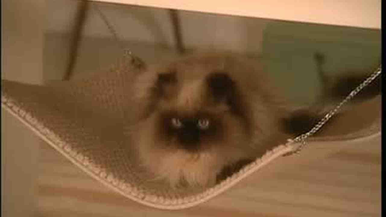 Video How To Make A Cat Hammock Martha Stewart