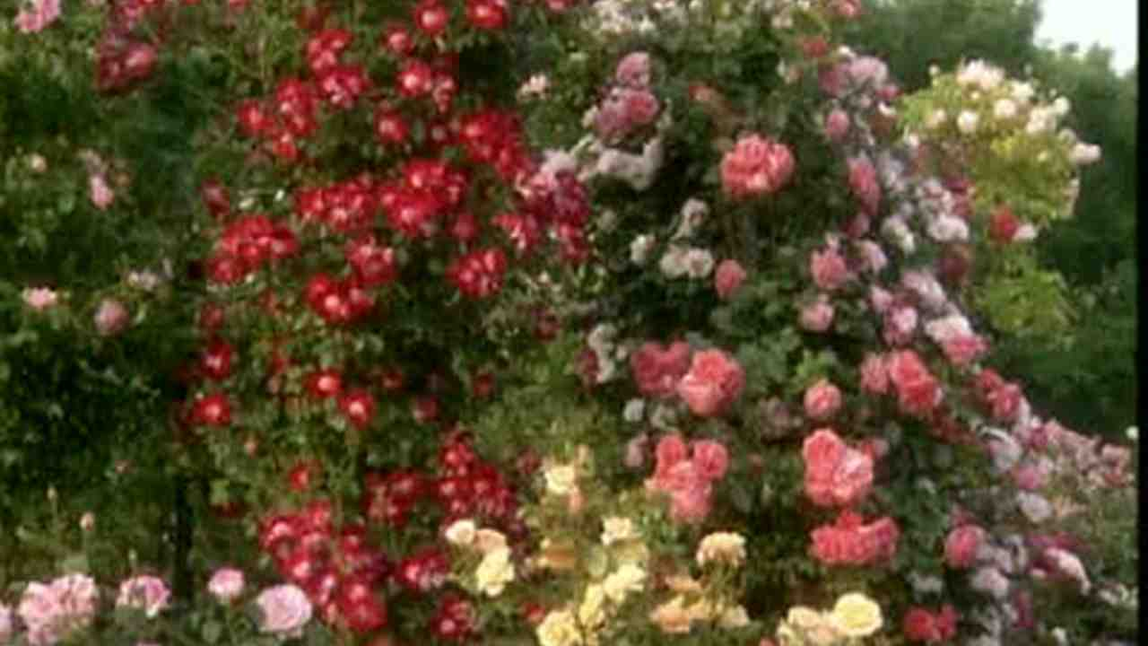 Video: How To Plant Cascading Petunias | Martha Stewart