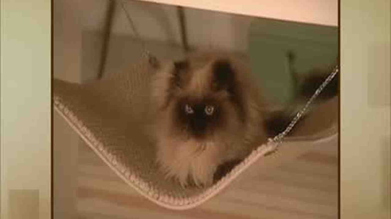 now playing video  how to make a cat hammock   martha stewart  rh   marthastewart