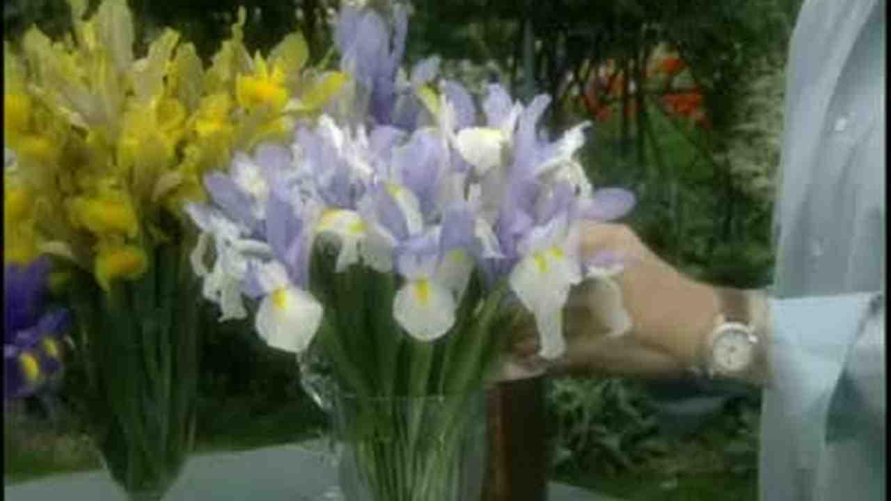 Video dutch iris flower arrangement martha stewart izmirmasajfo