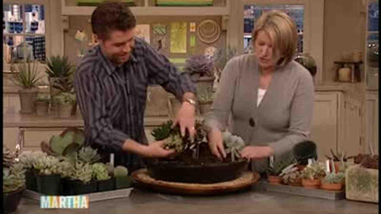 Video: Succulent Planting Arrangement   Martha Stewart
