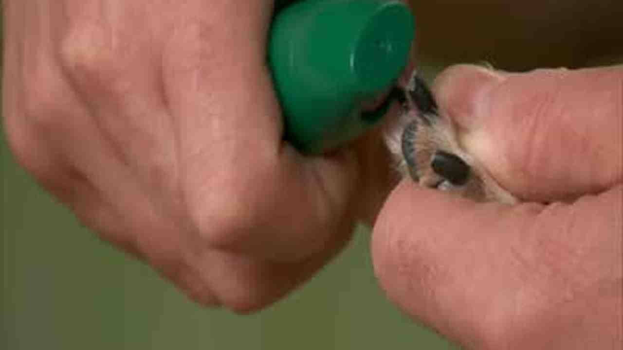 Video: How to Trim a Dog\'s Nails at Home | Martha Stewart