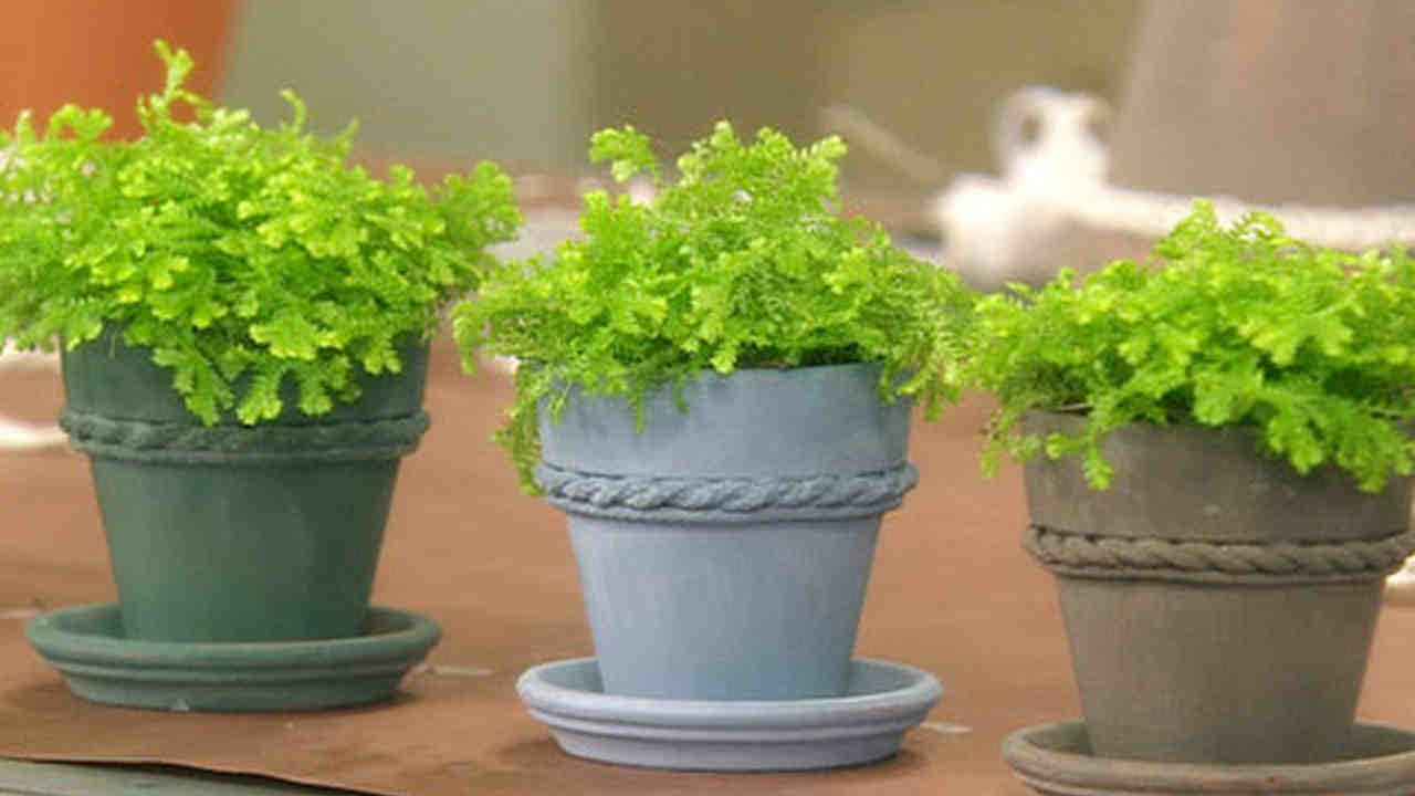 Video Milk Paint Terra Cotta Pots Martha Stewart