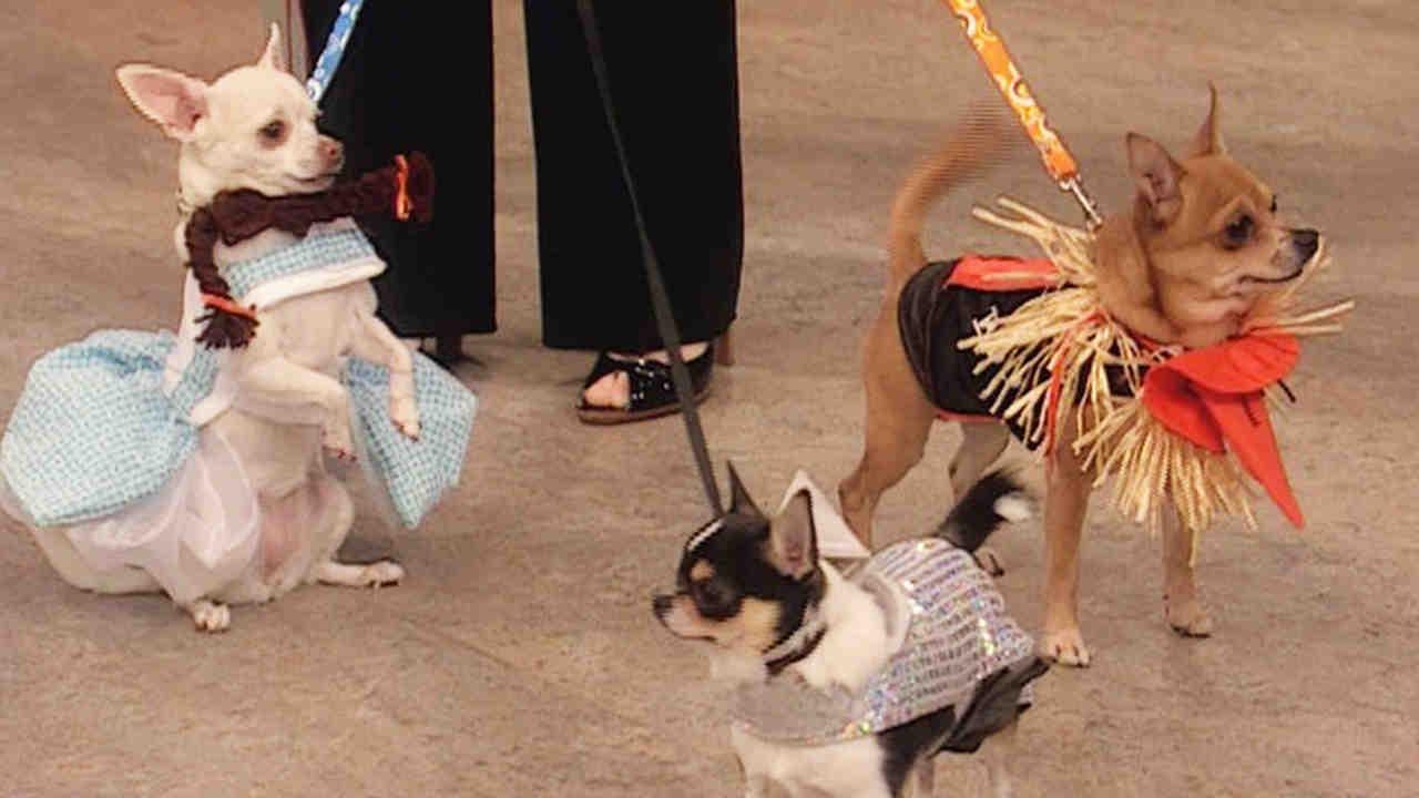 & Video: Best in Show: Halloween Dog Costumes | Martha Stewart