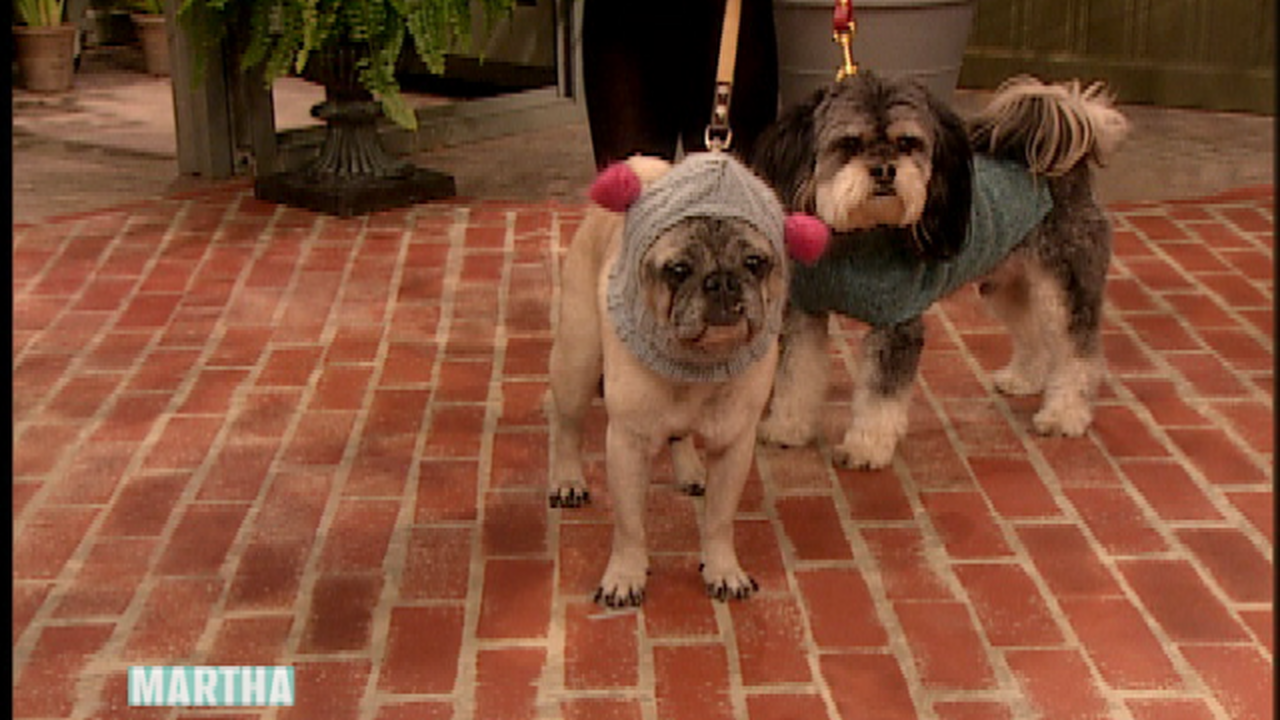 Video: How to Make an Upcycled Dog Sweater | Martha Stewart