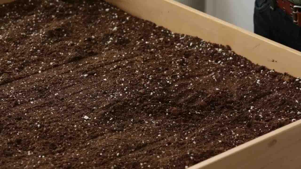 Video: How to Plant a Lettuce Garden | Martha Stewart