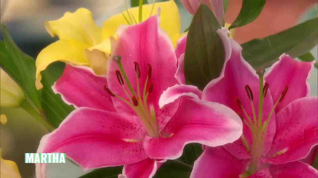 Video Lily Flower Arrangement Tips And Tricks Martha Stewart