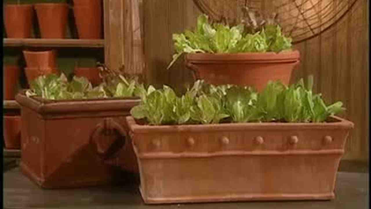 Video: How to Plant Lettuce In A Terracotta Pot | Martha Stewart