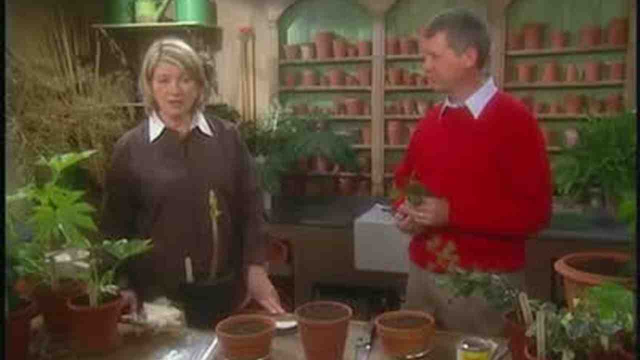 Video: Propagating Plants in the Aurelia Family   Martha Stewart on house plans, house cars, house fire, house stars, house chemicals, house ferns, house design, house nature, house rodents, house flowers, house mites, house gifts, house people, house decorations, house vines, house home, house slugs, house family, house crafts, house candy,
