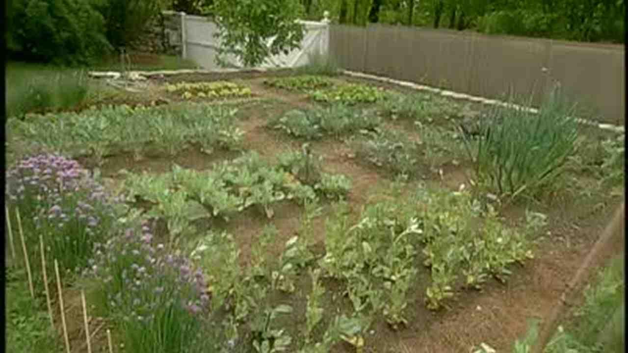 Video: How to Plan a Decorative Vegetable Garden | Martha Stewart