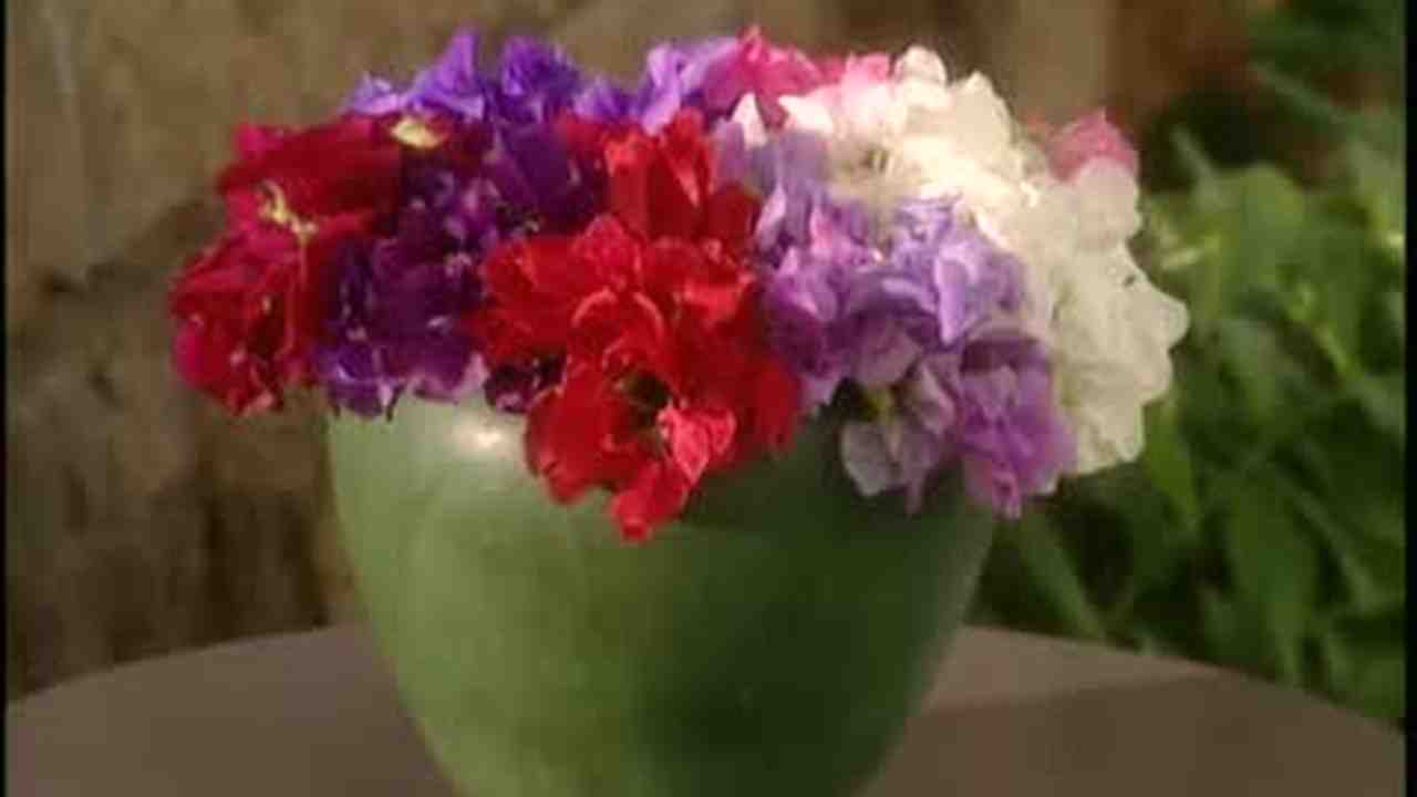 Video how to arrange sweet pea flowers in a vase martha stewart reviewsmspy